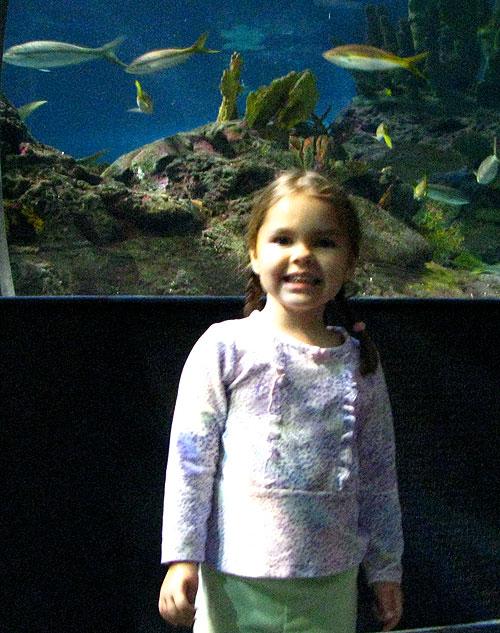 fishy-analise