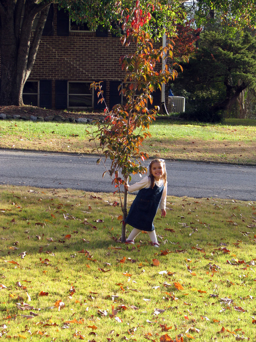 analise and her dogwood tree