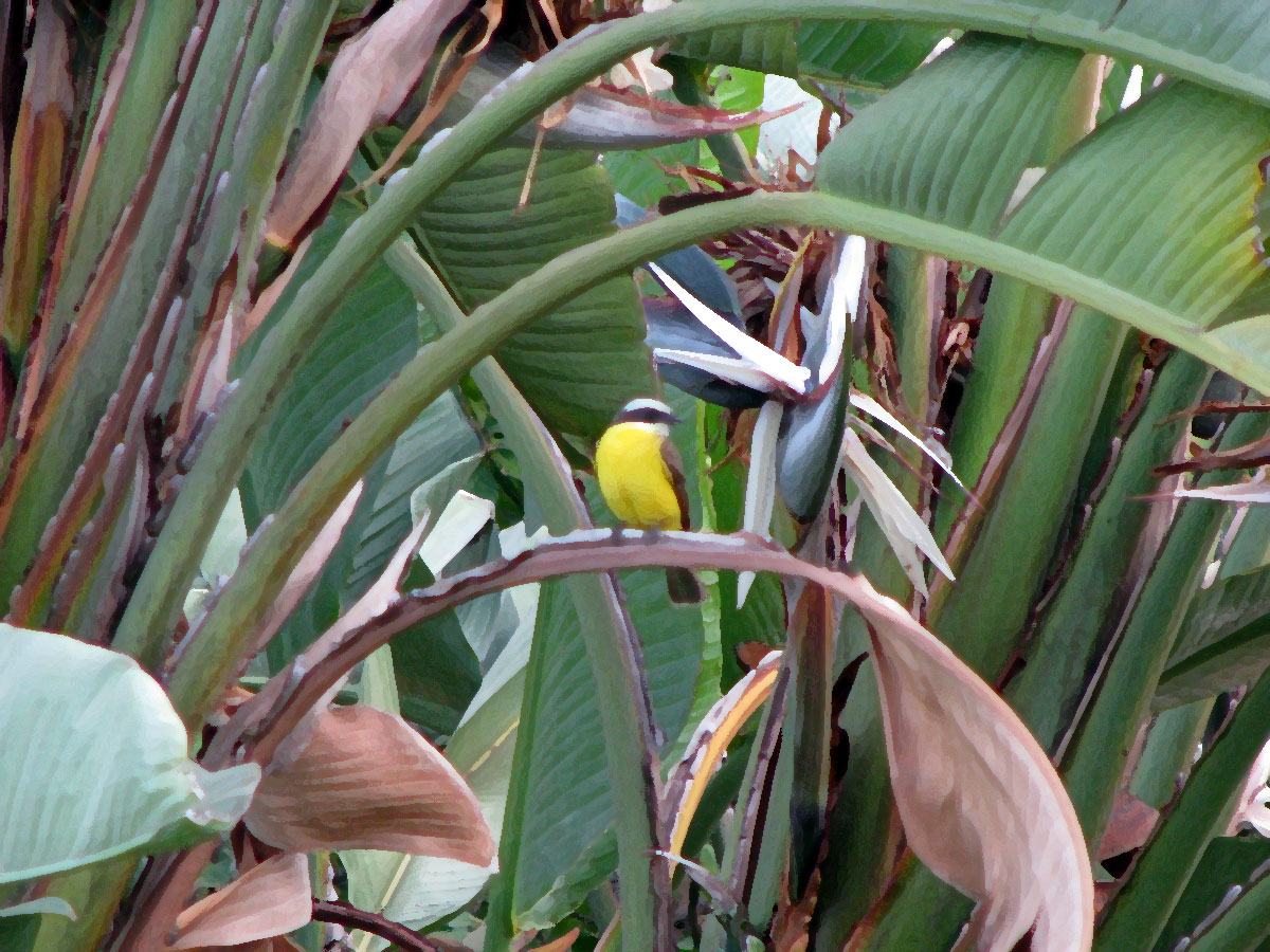 Another exotic bird