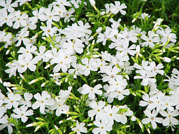 noc-flowers2