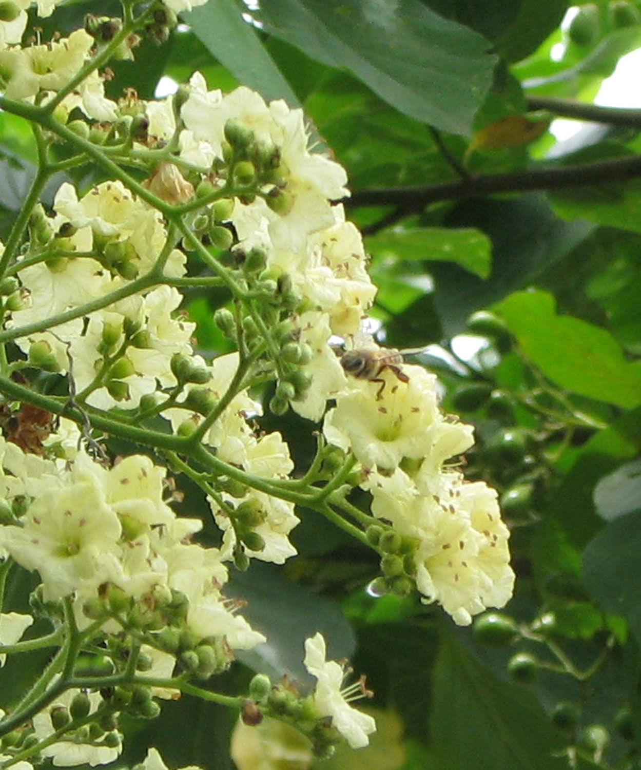 A honeybee in the flowers above the well