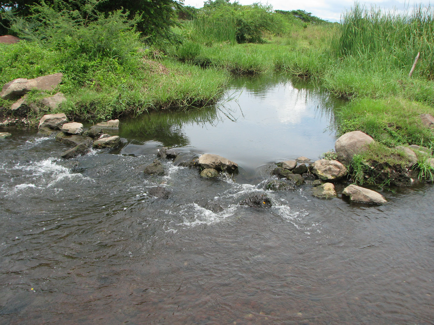 A spring-fed stream contaminated with arsenic