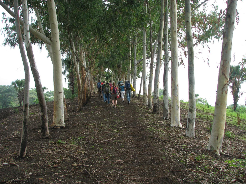 Our group walking through a row of eucalyptus trees