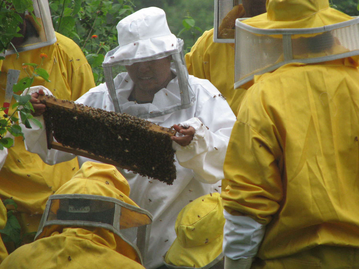 Erica is the Nuevas Esperanzas team member in charge of the beekeeping project - no gloves for her!