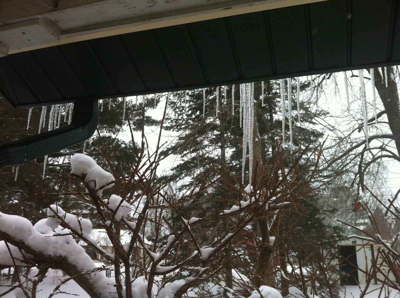 Icicles hanging outside on our way to go sledding